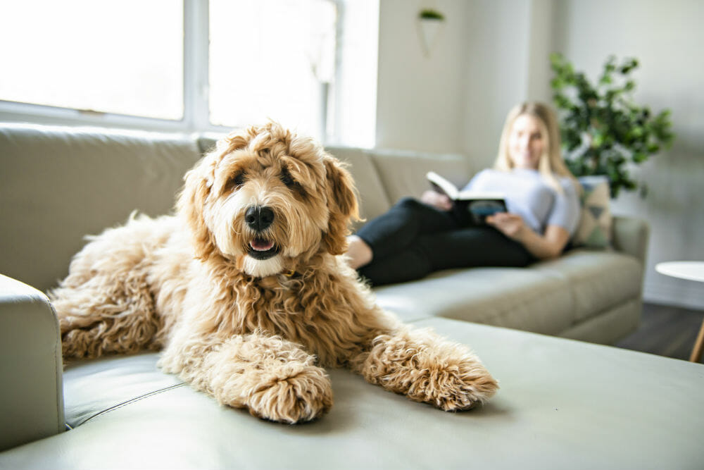 dogs for women living alone