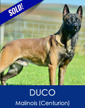 Duco Malanois Family Sold Dog